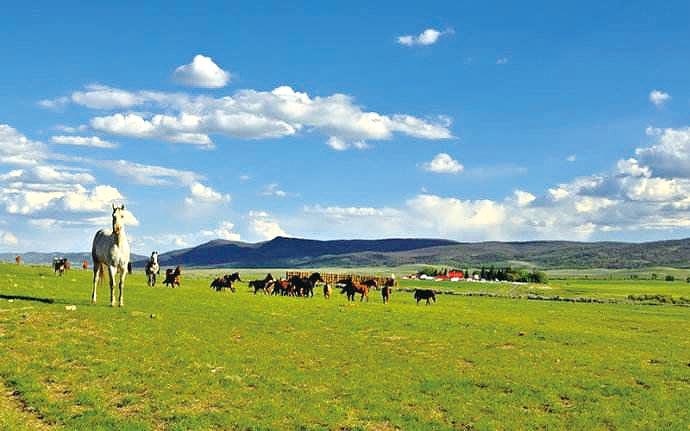 美国畜牧农场