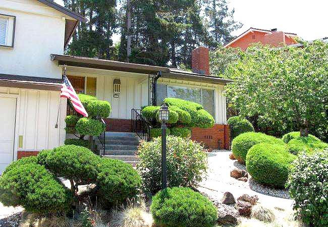 美国房子周围的树木生长旺盛,一不小心就窜到邻居院子里