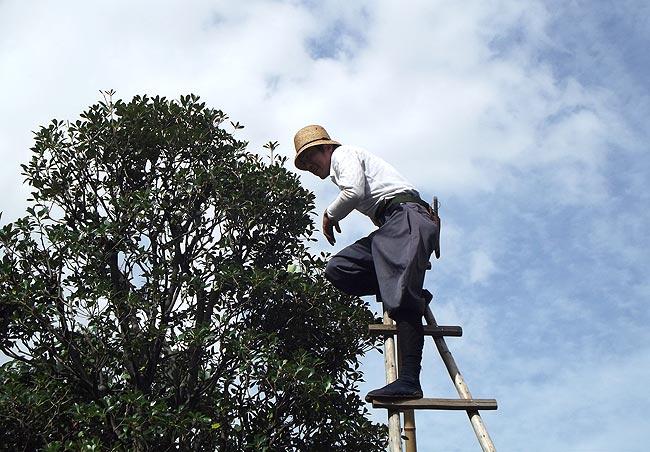 美国清除树木